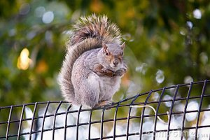 city-squirrel-6962795